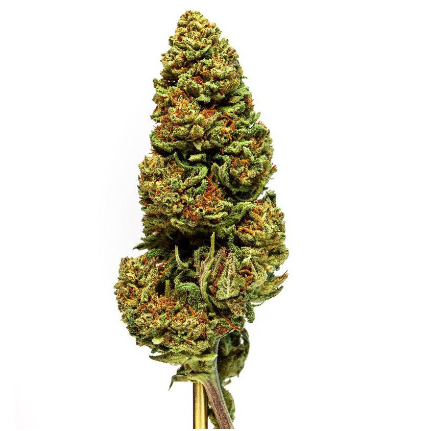 lifter hemp flower